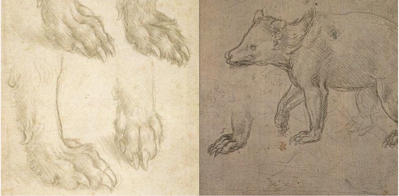 Leonardo da Vinci szkic rysunek niedźwiedź